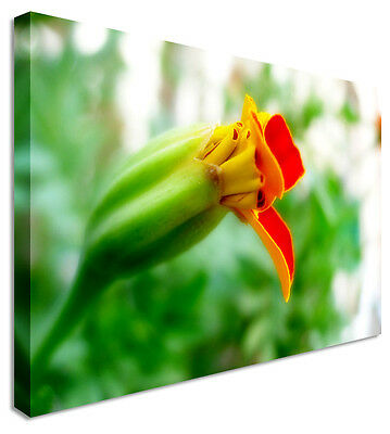 Jungle Flower Blooming Morning Canvas Prints Wall Art Picture Large Any Size