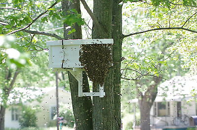 Honeybee Swarm Trap