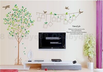 Huge Photo Frame Bird Tree Removable Wall Decals Stickers Mural Home decor art
