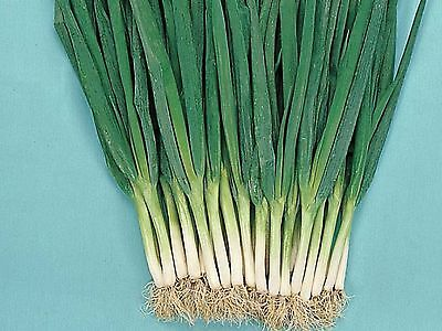 Spring Onion All Year (Approx 100 Seeds)