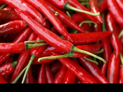 """Chilli Seeds Cayenne """"very Hot"""" 20 Seeds"""