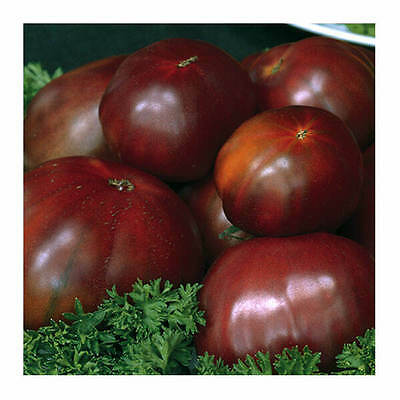 Tomato Black Russian ( 50 Seeds)