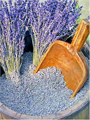 Dried Lavender Highly Fragrant - Top quality French very fragrant lavender