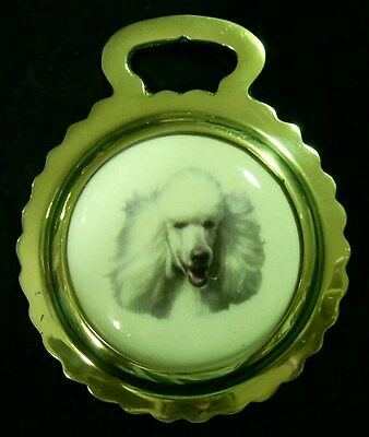 NEW DOG WHITE POODLE Ceramic Horse Brass England DOG LOVER Gift WOW YOUR WALLS!