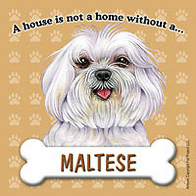 Maltese Magnet - House Is Not A Home Pup Cut