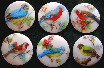 Collection of 6 Czech Unique Glass Buttons #A112 - XXLarge EXOTIC BIRDS
