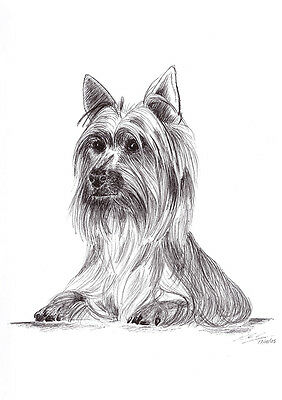 Silky Terrier dog Pet Pen Art Signed A4 Giclee Print