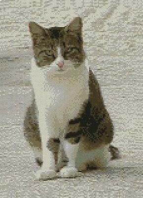 "White Tabby Cat Counted Cross Stitch Kit 8"" x 11"" 20.3cm x 27.9cm C2208"