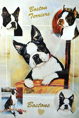 Boston Terrier Gift Wrapping Paper