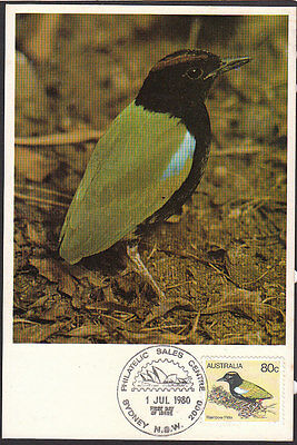 BIRDS Australia 1980 Rainbow Pitta Maximum Card Superb!