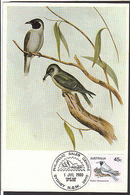 BIRDS Australia 1980 Masked Woodswallow Maximum Card Superb!