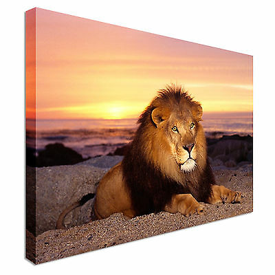 Lion Laying Down Jungle King Canvas Wall Art Print Large + Any Size