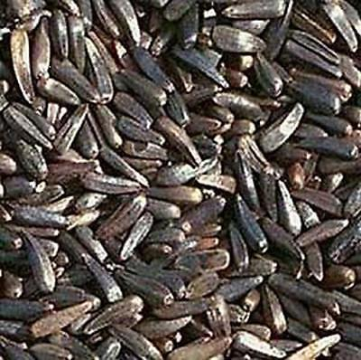 Nyger Niger Nyjer Seed For Finches 26 Size From 50G / 50 Kilos Multiple Listing