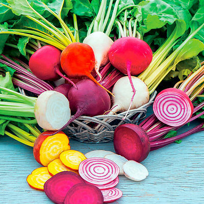 Beetroot Mix 50 Seeds Mixed Colours