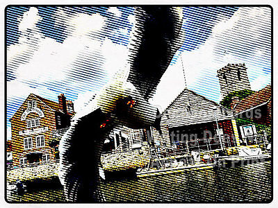 "7x5"" PHOTO Print Seagull Historic Market Town Wareham Quay # tracl 060"