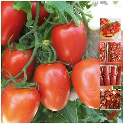 "TOMATO ""Roma Italian Delizia™"" seeds. Heavy yielding, compact bush (no staking)!"
