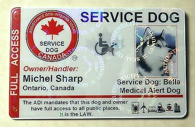 Holographic Canadian Service Dog Id Card Badge Adi Law Assistance Animal Tag 22