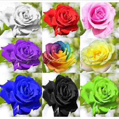 50 Semi di Rosa ARCOBALENO Rose Multi Colore Flower Seeds Decor Casa Giardino