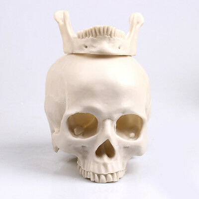 Wholesale Human Skull Replica Resin Model Medical Realistic lifesize 1:1