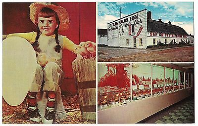 CHICK MUSEUM STERLING, MICHIGAN UNUSED POSTCARD Vintage FREE SHIP Front Porch