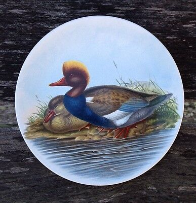 """Poole England Pottery 6"""" Dish """"Red - Crested Duck JOHN GOULD 1804 - 1881"""