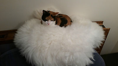 Luxury Sheepskin Bed or Rug for your Cat, Very Soft & Thick, Natural, Brand New