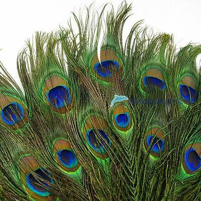 50pcs lots Real Natural Peacock Tail Eyes Feathers 8-12 Inches/about 23-30cm #DH