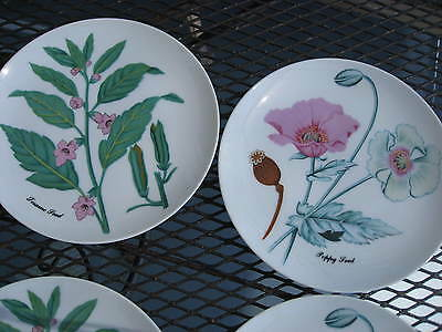 HORCHOW PLATE 2 BOTANICAL HERB PLATES POPPY & SESAME SEED 7-5/8 JAPAN NICE.