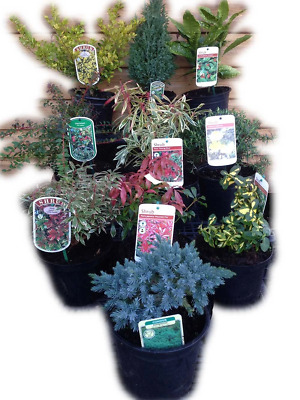 5 Mixed Shrubs in 2L Pots - Great Savings - Wholesale Price