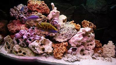 10 kg MIXED SET OF STONES FOR MALAWI CICHLID AQUARIUM OCEAN ROCK SHELLS CORALS!