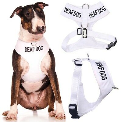 DEAF DOG Padded Waterproof Vest Harness Leads or Sets EX S Small Medium Large