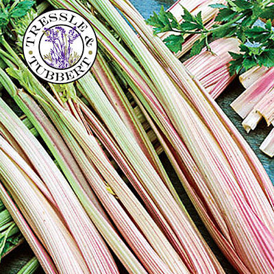 Rare Celery Peppermint Stick Vegetable  approx 100 seeds  UK SELLER