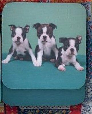 BOSTON TERRIER PUPPIES Rubber Backed Coasters #0886