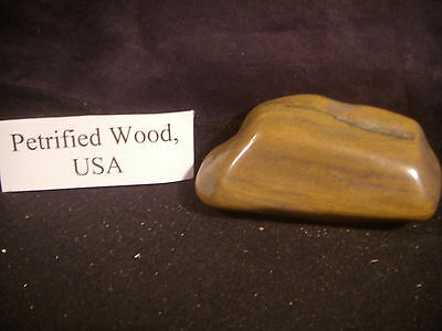 Beautiful Polished Petrified Wood From the United States.
