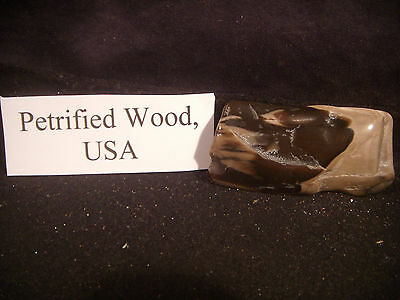 Beautiful Polished Petrified Wood From the United States Awesome