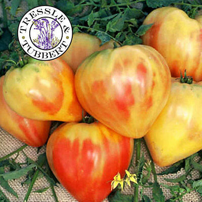 Rare Tomato Orange Russian Vegetable  20 seeds  UK SELLER