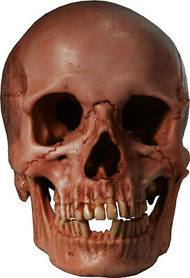 Authentic Human Skull-Life Size Replica Aged Relic BLOOD STAINED Red From USA