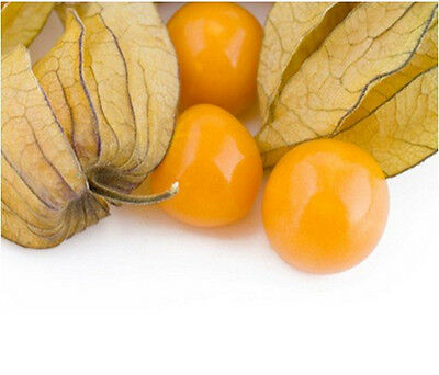 Fruit-Cape Gooseberry - GIANT - Physalis Peruviana - 30 Finest seeds
