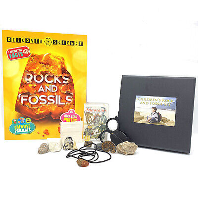 Childrens Rock and Fossil Set - Gift Box