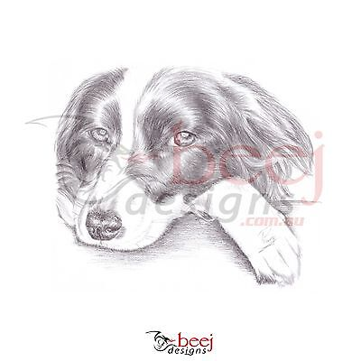 Border Collie Pencil Drawing - A4 - Dog watching head down Black  White waiting