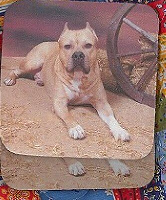 BULL TERRIER AM. STAFFORDSHIRE Rubber Backed Coasters #0646 PITBULL