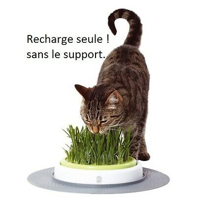 Recharge Herbe A Chat X 2 Senses