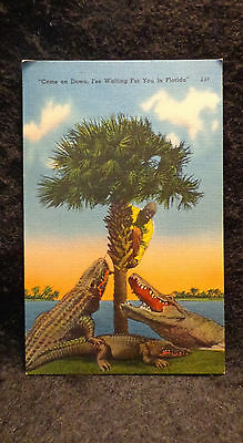 """Black Americana Postcard """"Come on Down, I'm Waiting For You in Florida"""" Unused"""