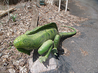 Trained IGUANA LIZARD High quality spines Excellent Display!