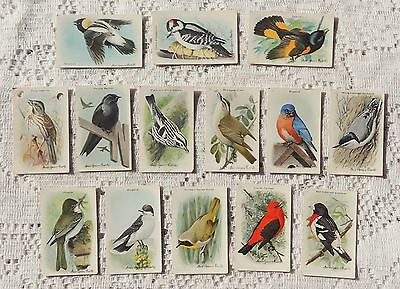 VINTAGE ARM & HAMMER TRADING CARDS - NINTH SERIES - USEFUL BIRDS OF AMERICA