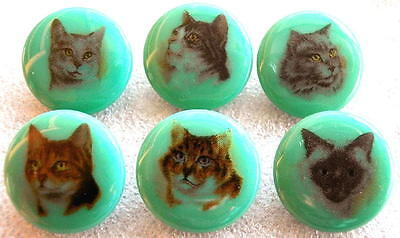 6 Czech Glass Decal Buttons #D608 - SWEET COLLECTION of CATS!!!!!!!!!!!!!