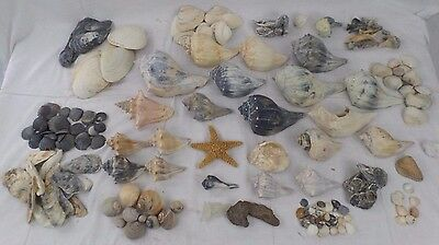 Sea Shell Collection Conch,Starfish,Snails,Oysters,Colorful Unique Lot of 120+