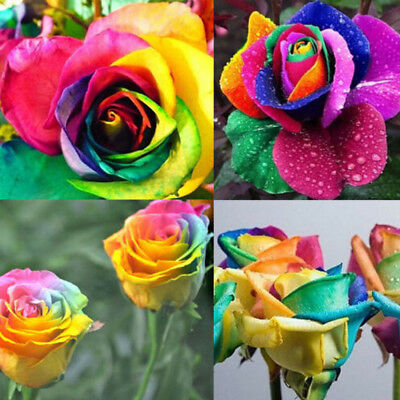 200Pcs Rainbow Rose Flower Seeds Home Garden Plants Colorful Rare Flower Seeds