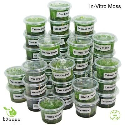 In Vitro Moss - Live Aquarium Plant for Fish Shrimp Tank Nano Scape Co2 InVitro
