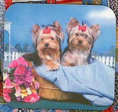 YORKSHIRE TERRIER PUPPIES Heavy Rubber Backed Mousepad #0603